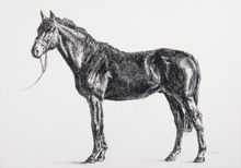 Black horse 1